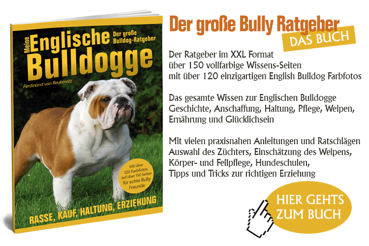 Banner_Englische_Bulldogg_3