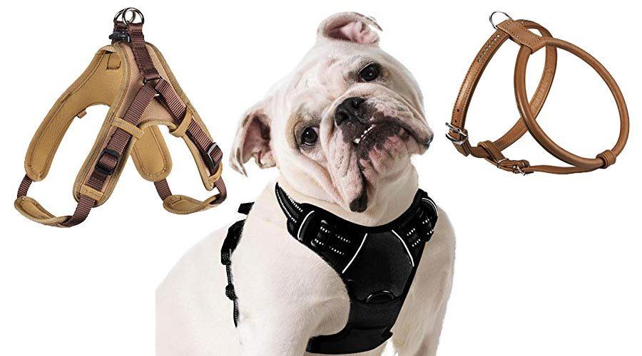 Hundegeschirre für Englische Bulldogge